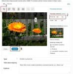 Kadrowanie obrazka w WordPressie - kroki