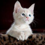 Przykładowa galeria w WordPressie - Kotek